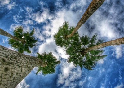 Canyon Vista Recovery Center - palm trees sky view