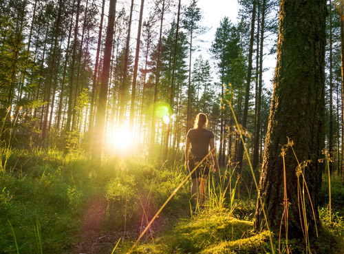 Ecotherapy for Recovery