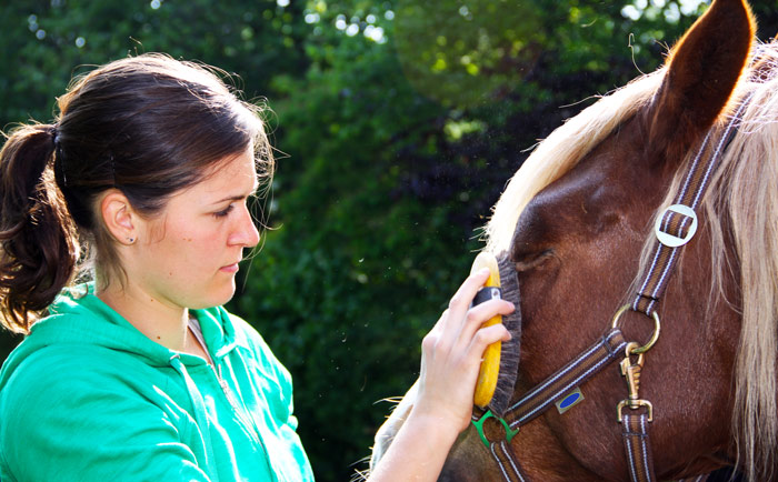 young brunette woman in green hooded sweatshirt brushing brown horses face
