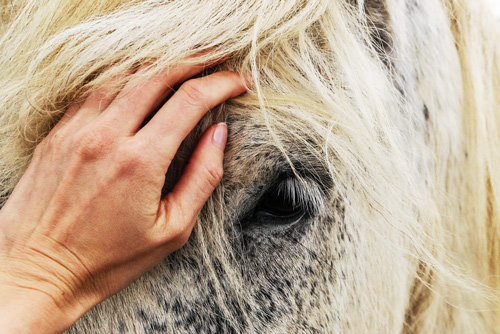 The Benefits of Equine Therapy in Recovery